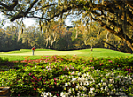Thumbnail for: Willbrook Golf Club Celebrates 30 Years of Spectacular Lowcountry Golf