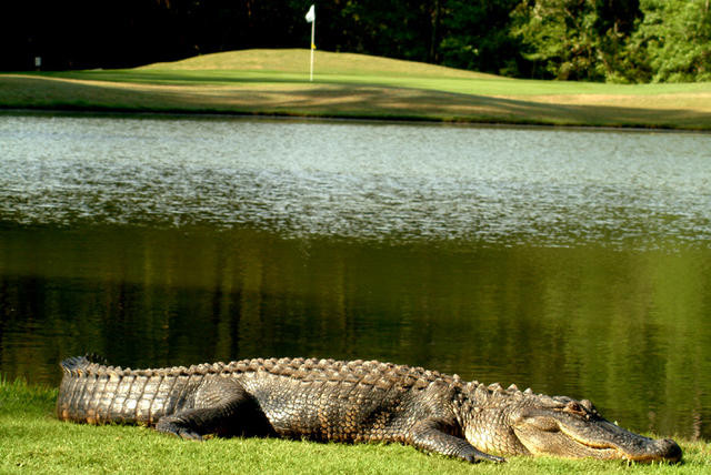 Blackmoor Golf Club Golf Myrtle Beach Golf Guide